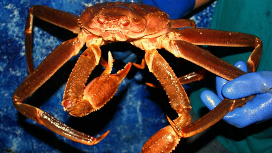 how to kill crab lice
